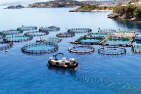 Mersin Balık Çiftliği Gündem Araştırması